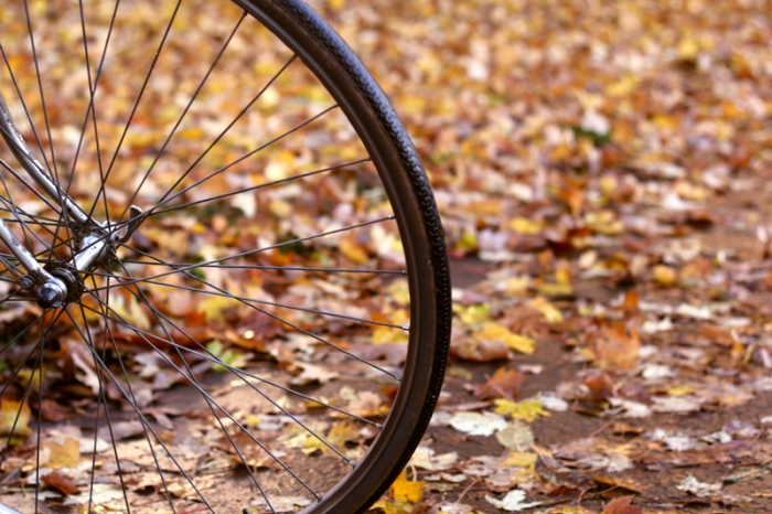 Bicycle Autumn